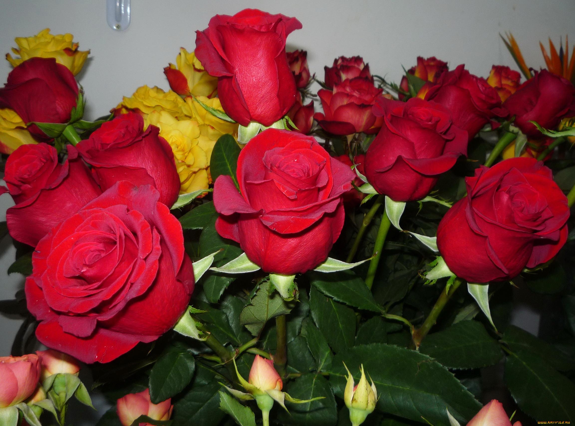 Картинки розы букеты большие с добрым утром